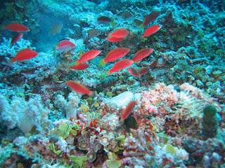Quần xã sinh vật trong lòng địa dương