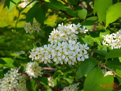 Copac cu flori