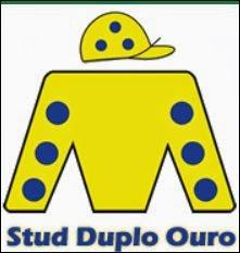 Stud Duplo Ouro - Brasil
