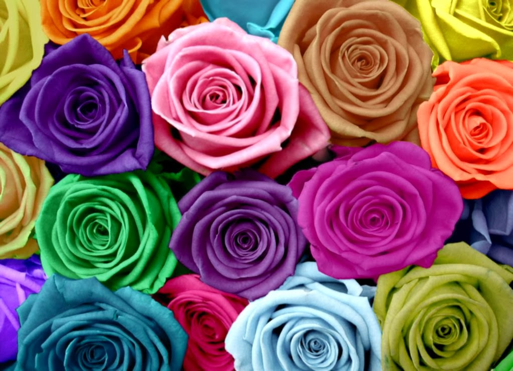 All 4u hd wallpaper free download rainbow flowers for Colorful roses images