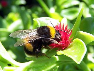 L'attitudine dell'ape