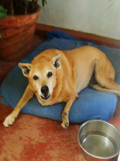 Dog Rescue Rehabilitation Goa