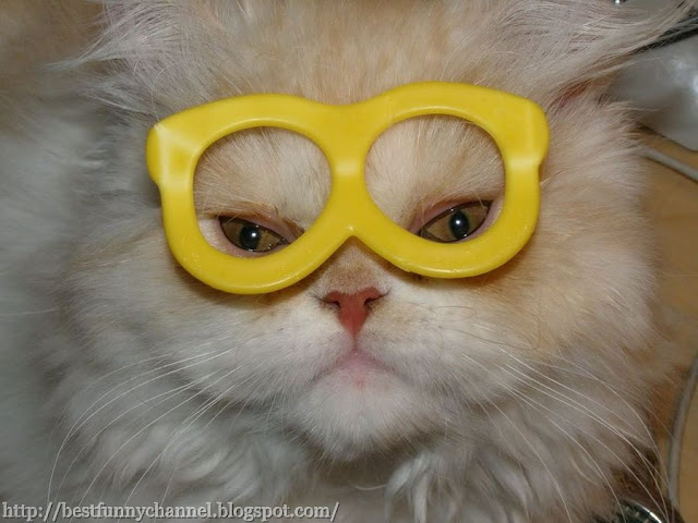 Cat in funny glasses.