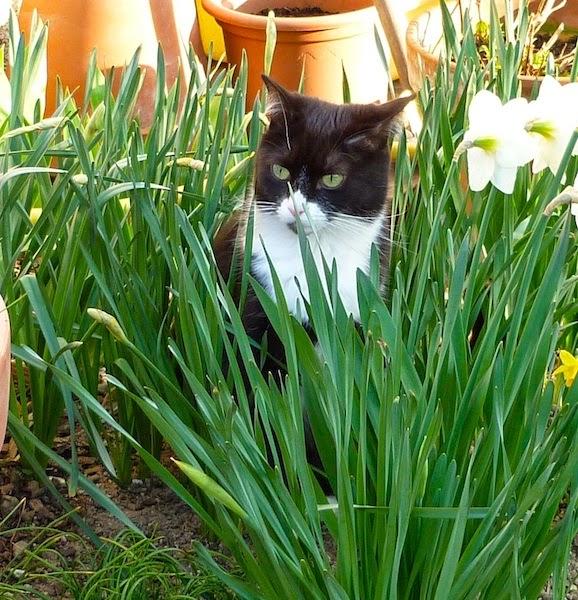 Фримусс в саду