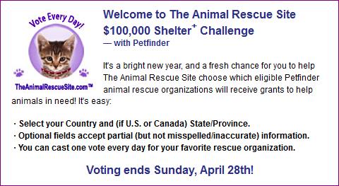Shelter Challenge