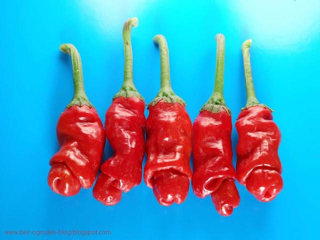 papryfiutki, najbardziej pornograficzne papryczki chili