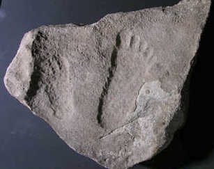 A.M. Cofee Track - a human foot imprint in rock that's 225 million years old