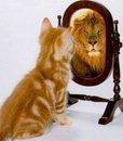 Leão ou gatinho?!