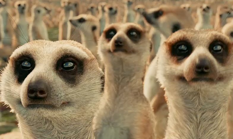 Meerkats life of pi - photo#8