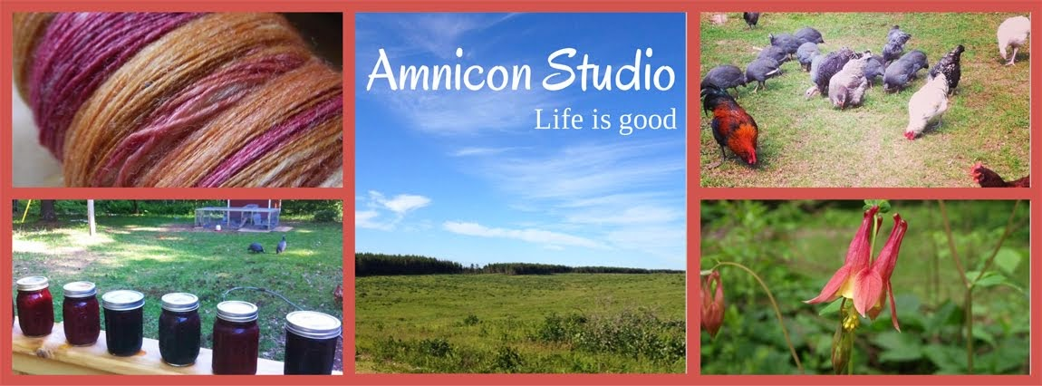Amnicon Studio