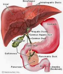 Faktor Penyebab Penyakit Liver