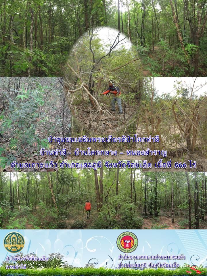 ป่าชุมชนเฉลิมพระเกียรติป่าโคกท่าสี เนื้อที่ 866 ไร่