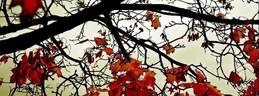 Bow Down Autumn Tree