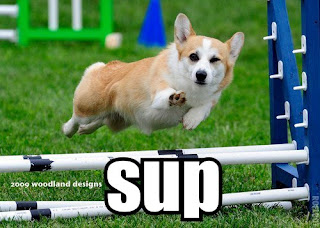 cute corgi sup