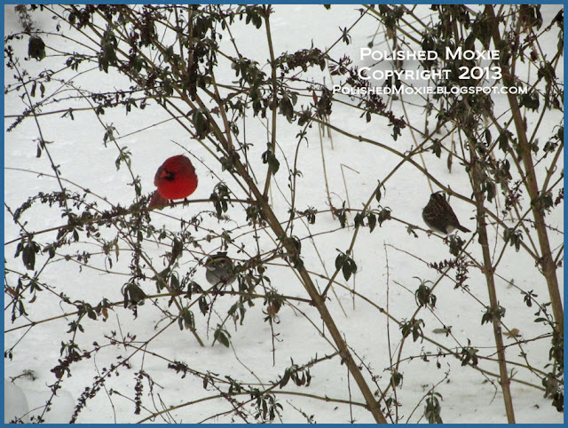 Picture of cardinal, finch, and sparrow on butterfly bush in winter.