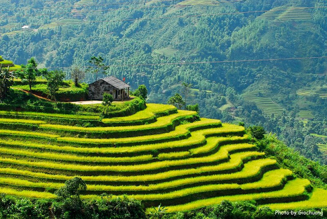 Terraced fields Sa Pa - Lao Cai - Vietnam