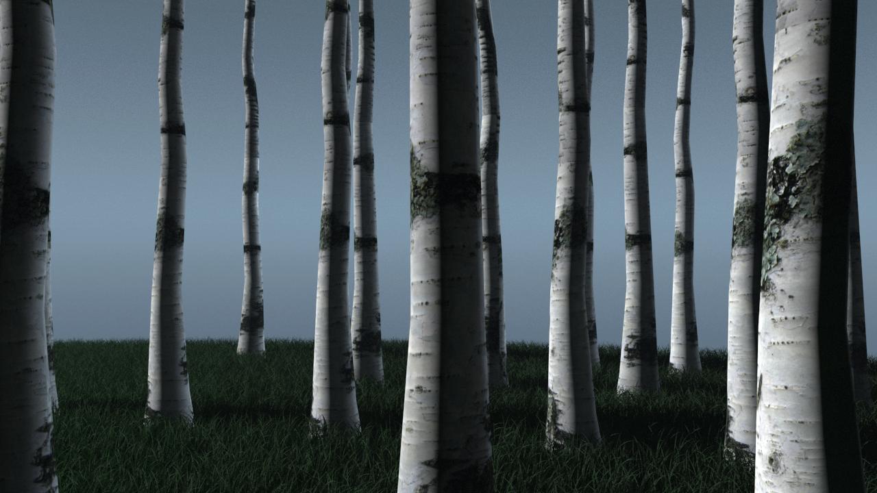 CGTalk | Birch Tree Trunk Render Test