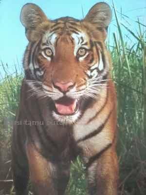 Taman Nasional Kaziranga India