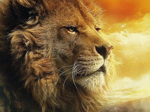 Quem é O Leão Da Tribo De Judá O Verbo