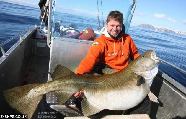 активатор клева big fish is hungry universal