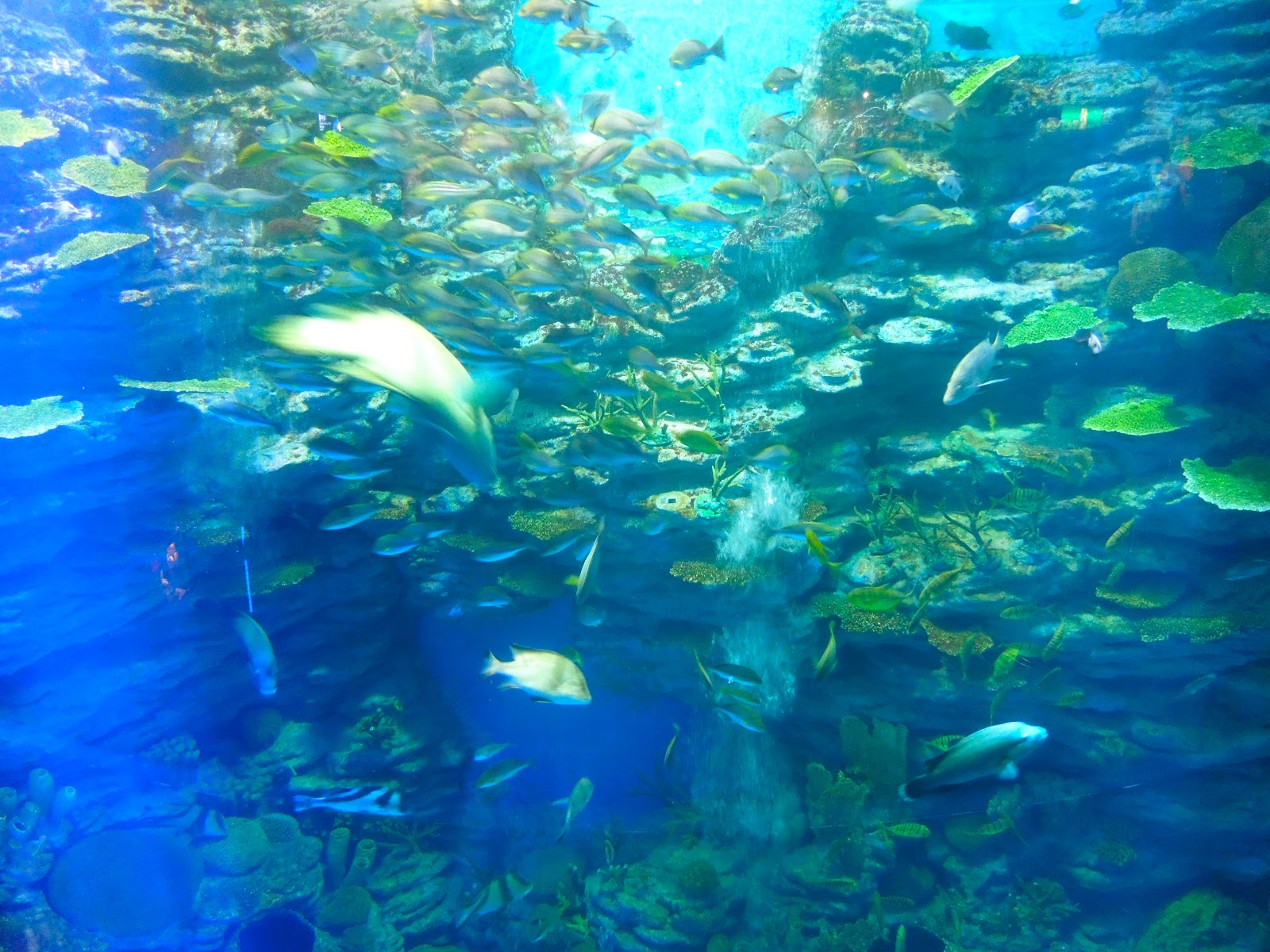 travelingmitch: The Busan Aquarium, Korea: Underwater, Underground