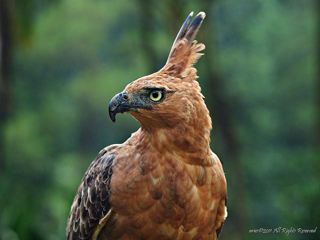 Burung Garuda Mitos Atau Fakta Bisa Image