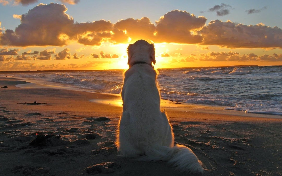 Must Seen 2015 Dog adn Sunset Wallpaper