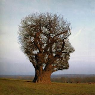 el pensamiento afecta la realidad
