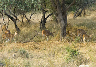 Wildlife Rajasthan