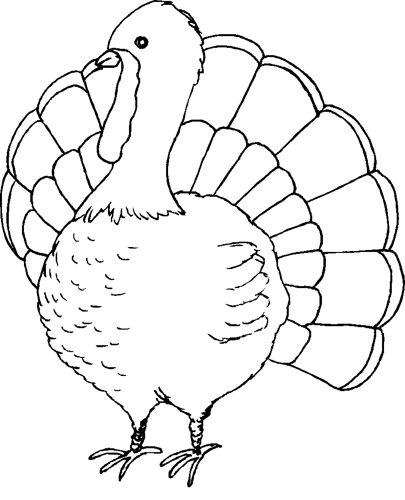 It is an image of Universal Turkey to Color Free Printable