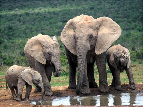 baby elephant beautiful wallpaper elephant hd image elephant hd picSumatran Elephant
