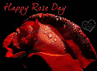 rose day pictures for whatsapp