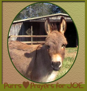 Purrs and Prayers for Joe