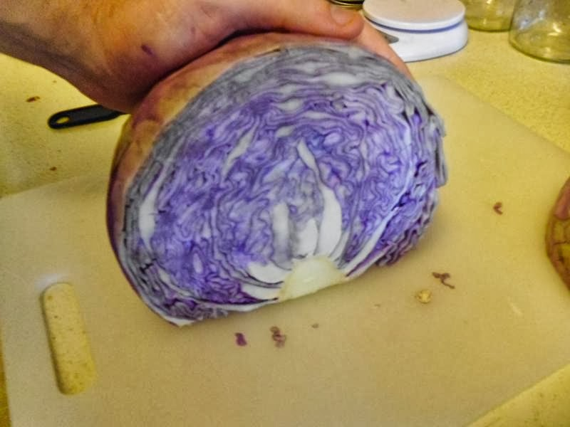 The inner of red cabbage