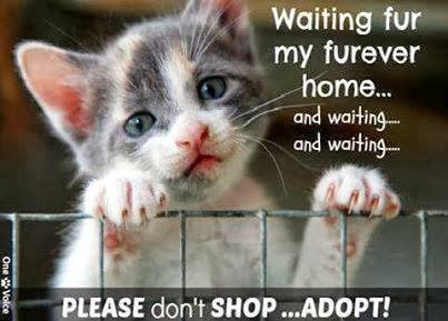 let's adopt
