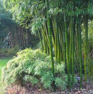 Bamboo Gardens7