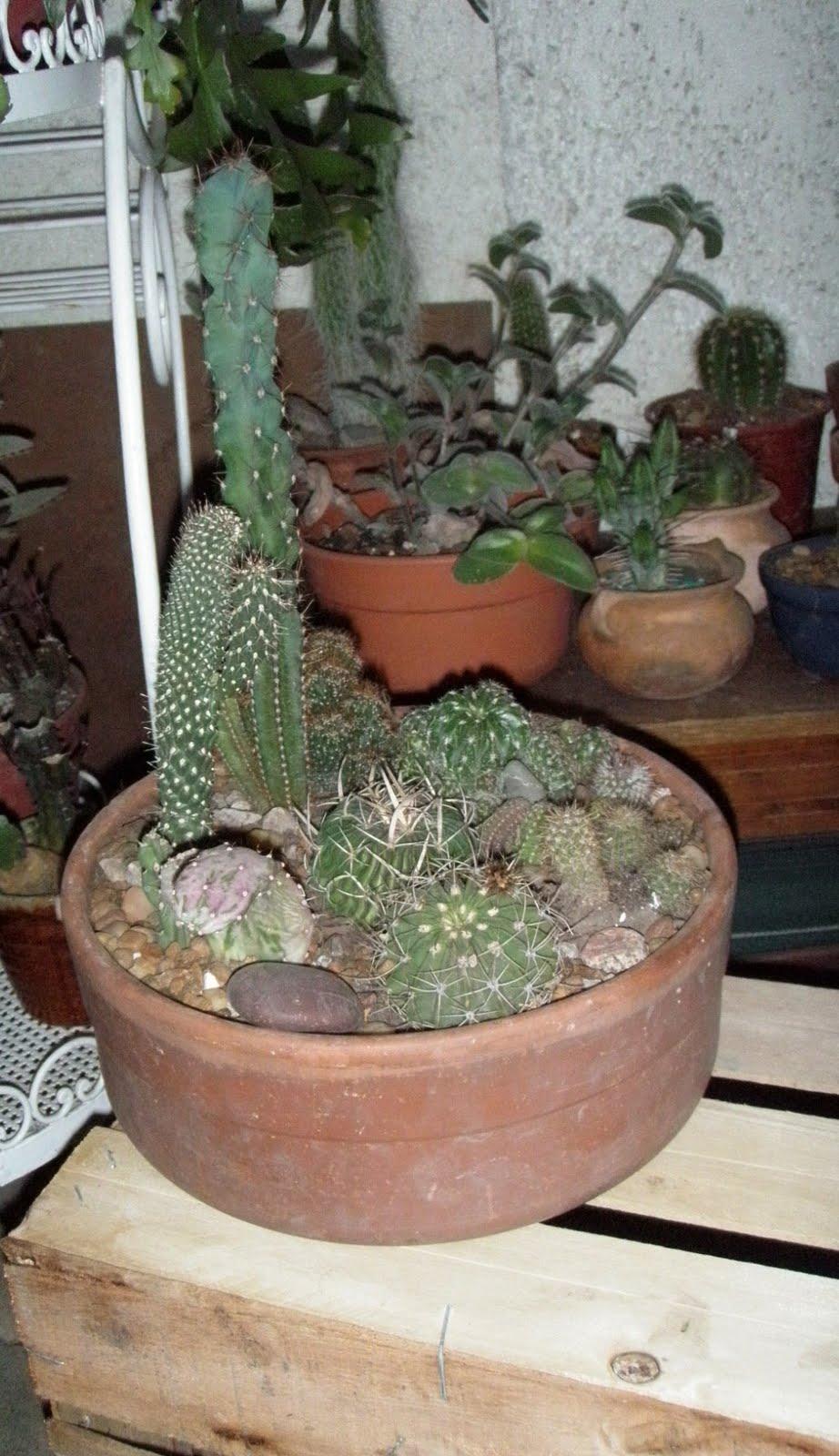 Jardines de cactus y suculentas composiciones realizadas - Composiciones de cactus ...