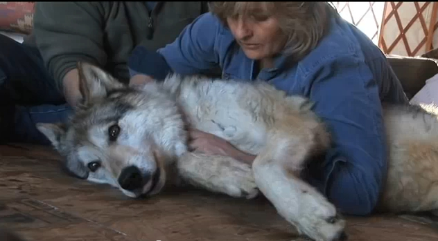 Energy Healing Wolf (Video)