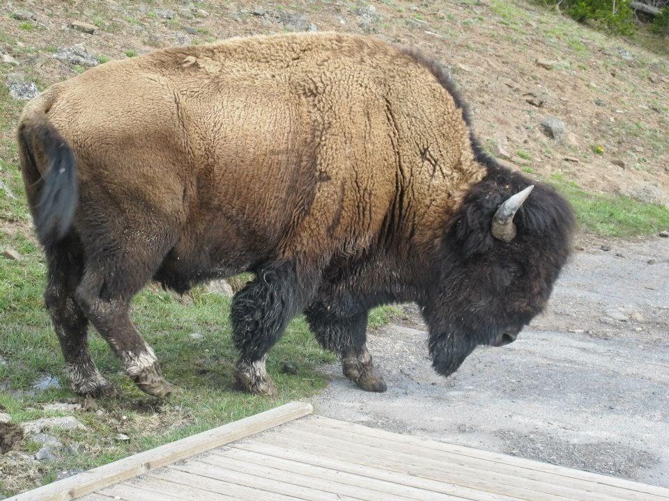 "<img src="" Yellowstone and Grand Teton National Parks.jpg"" alt="" http://dailytravelexperience.blogspot.com/"" />"