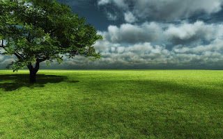 Grass Wallpapers Widescreen