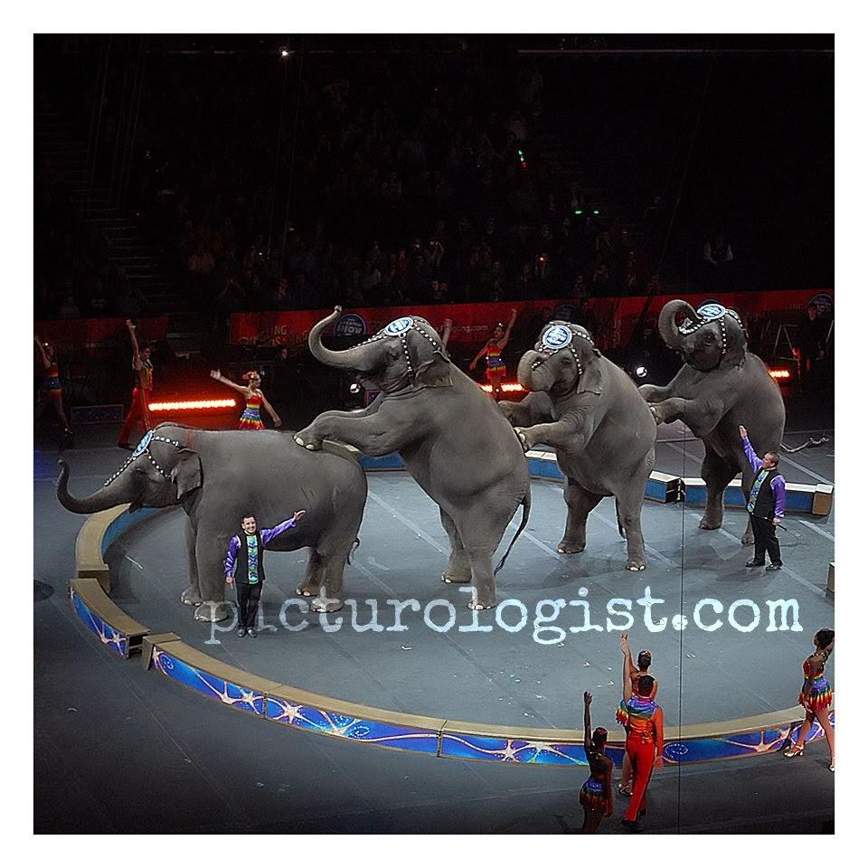 Circus elephants | #RinglingInsider @MryJhnsn