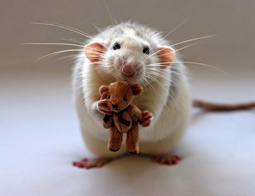 rato com boneco