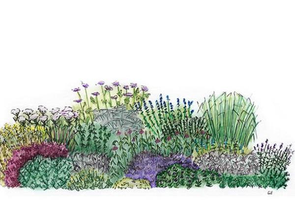 un jardín de hierbas aromáticas - guia de jardin. aprende a cuidar