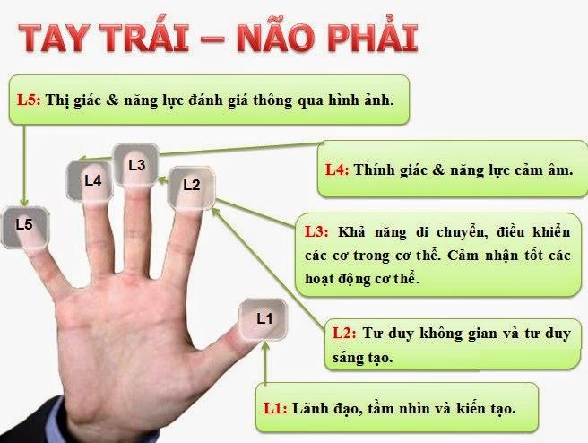 Mối liên hệ giữa vân tay và não phải