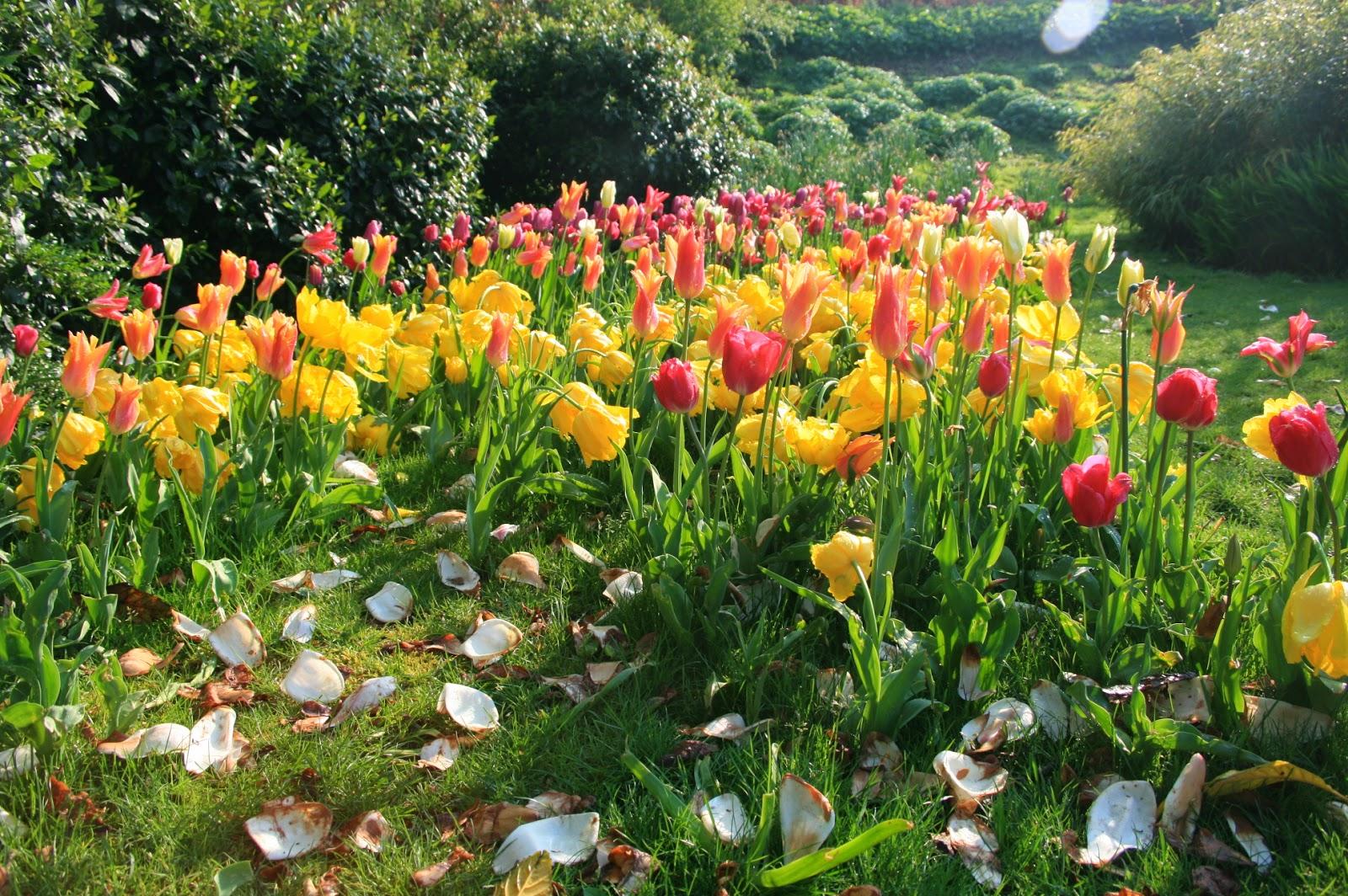 http://graindesab.blogspot.fr/2015/02/en-fleurs.html