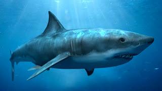 Megalodon Shark - Binatang Purbakala