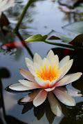 . ai pelosetti ieri, ma mi piace molo anche questa foto dei fiori di loto.