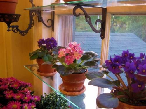 macetas-ventana-estantes-cristal-violetas-africanas