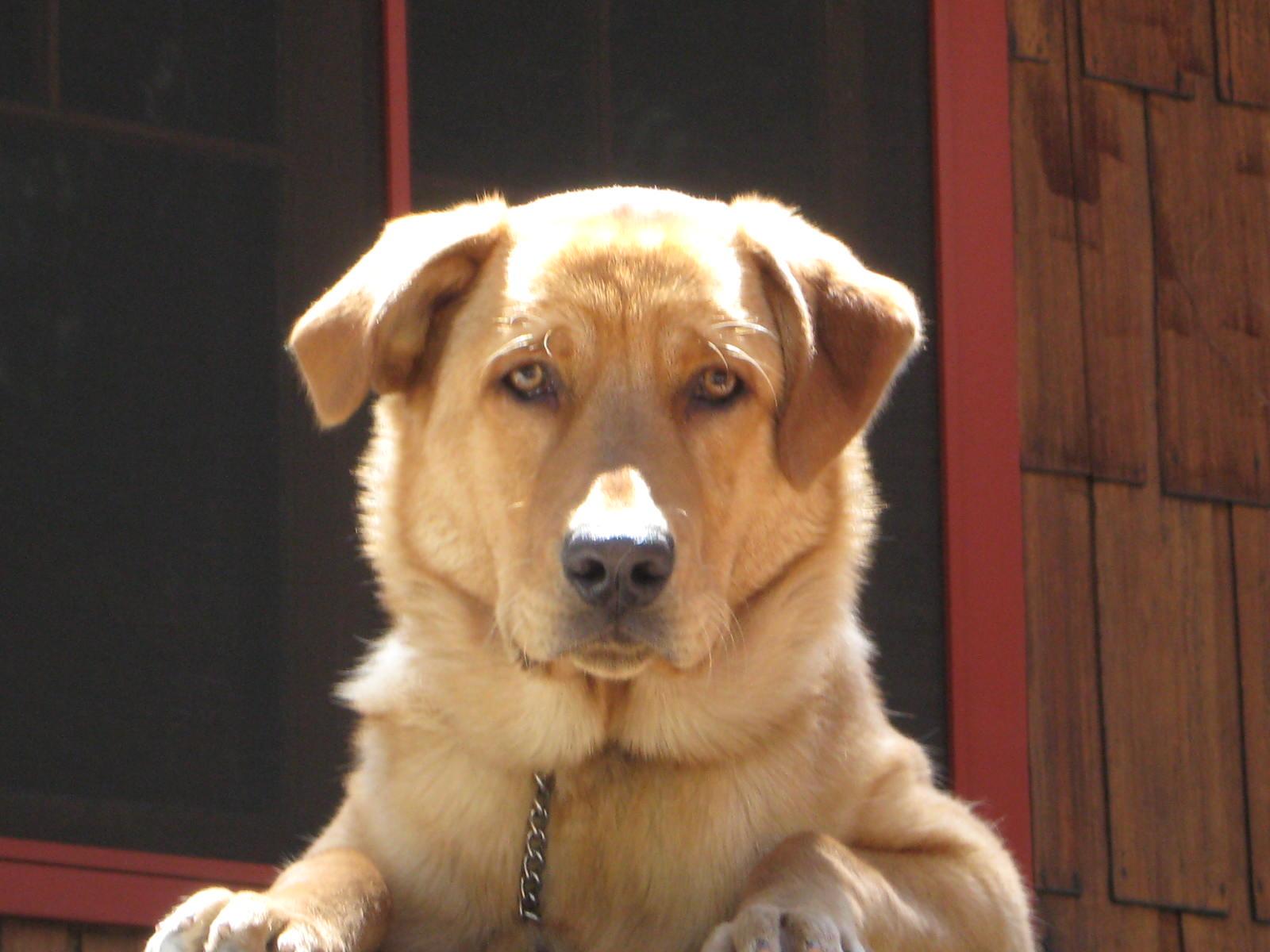 Mad World: My Racist Dog