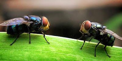 Hati-hati! Seekor Lalat Bisa Membuat Kita Masuk Neraka Selama-lamanya